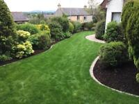 Hollybush tree and landscape services