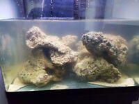 Premium Pacific live rock for marine aquarium.