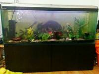 Large Fishtank for sale fish tank 144 liter