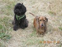 SURREY PET ANGELS..Professional Dog Walker and Holiday Pet Care. Based in Surbiton. Established 2010
