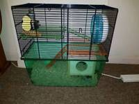 Male Gerbil for sale