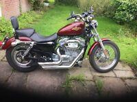 Harley Davidson 883 sportster xl low
