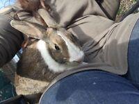 Gorgeous girl rabbit