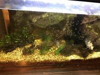 105l fish tank £60 BARGAIN