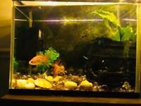 15l fish tank