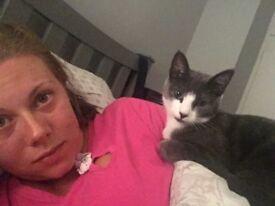 Missing grey cat