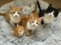 Kittens for Sale £250