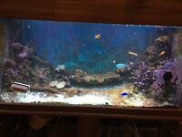 Complete marine fish tank set up