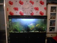 fish and complete tank
