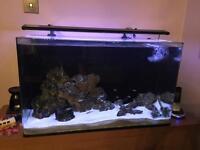 Aqua one aquarium