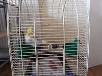 Male Cockatiel with cage only £40