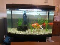 Interpet 120 litre fish tank
