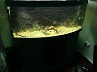 Jewel 450 litre fish tank