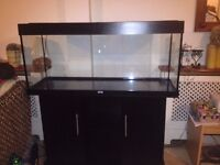 Juwel Rio 240 Aquarium with light hood and cabinet stand Excellent condition 6 months old from new