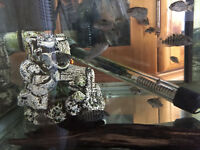 Convict Cichlid fry 4 months approximately 2 cms for Sale £2.00 each
