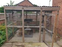 Catio with cat trees, house and ladders