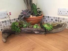 Driftwood patio planter