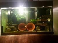 Juwel 125l fish tank for sale