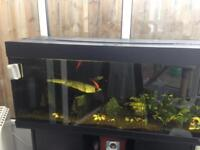 4ft Rio juwel tropical tank with cabinet