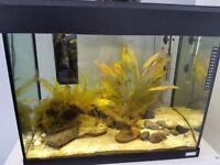 fluval fish tank 90l