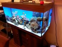 Juwel Rio 180 tank with sump *excellent condition*