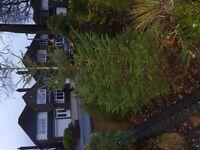 Outdoor Christmas Tree - ready to go...