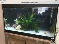 Fluval 200L aquarium
