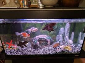 Big Fish Tank for Sale