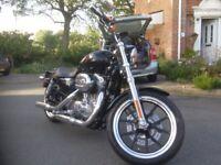 Harley davidson sportster 883 super low .