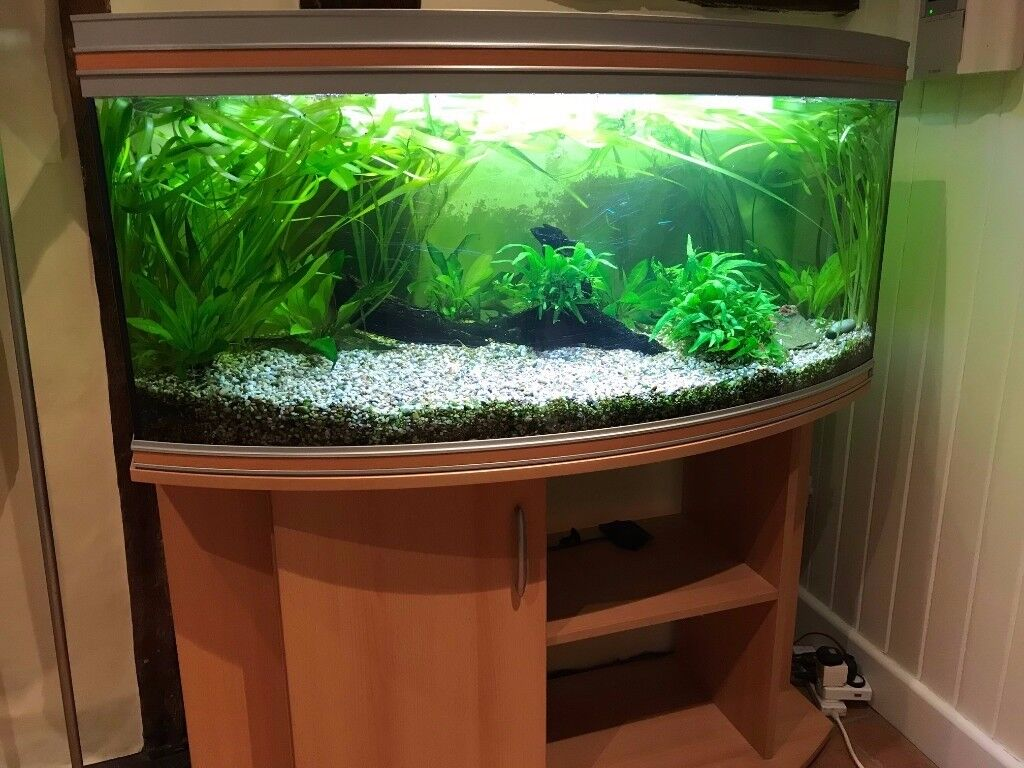 4ft./1.2M Rena Bow Front Aquarium with stand, pump and contents. owner going abroad
