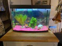 Goldfish x3 and tank