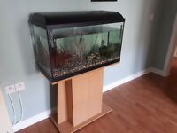 90ltr fish tank with 4 tropical fish