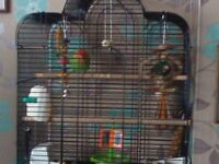 Lovebird With Cage