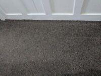 Brown carpet 30 sq metres with underlay