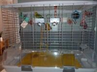 2x budgies, large cage and extras