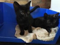 Two female kittens looking for forever homes