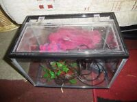 SMALL GLASS FISH TANK WITH FILTER PUMP