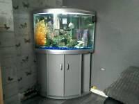 Aqua one 700 aquarium
