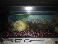 5 piranhas