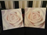 Cream Rose Canvas Pictures