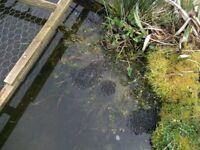 Free Frog Spawn