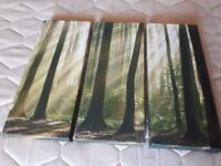3 X PICTURE PRINTS WOODEN FRAMES FOREST SCENE
