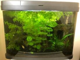 64 Litre interpet fish tank. Few fish and accessories