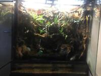 Planted exo terra terrarium