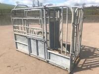 IAE cattle crush