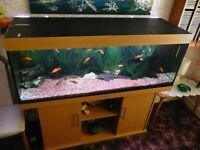 Tropical Fish Tank with Stand, all Equipment and fish, 151cm x 62cm tall x 51cm deep Over £1000 new