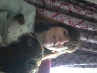 local dog walker do u need a dog walker to walk ur fury frinds call emma on 07725317639 or 2529322