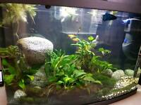 64 litre love fish panorama