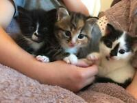 Adorable kittens - ready to reserve