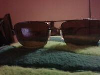 Serengeti rogia sunglasses